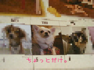 81107-3.jpg